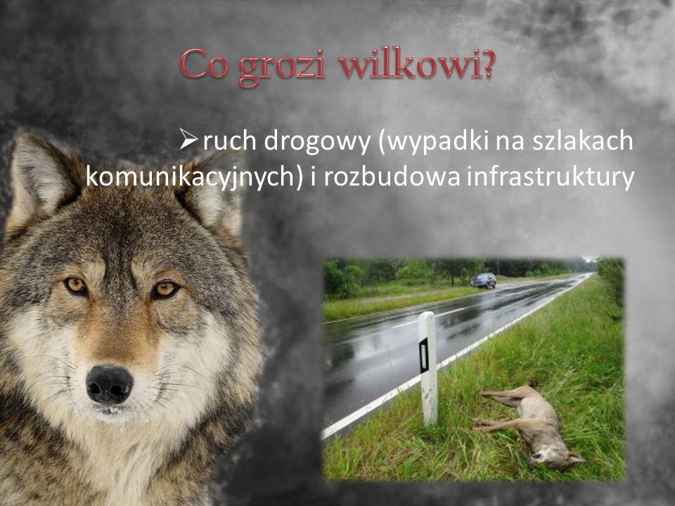  ruch drogowy (wypadki na szlakach komunikacyjnych) i rozbudowa infrastruktury