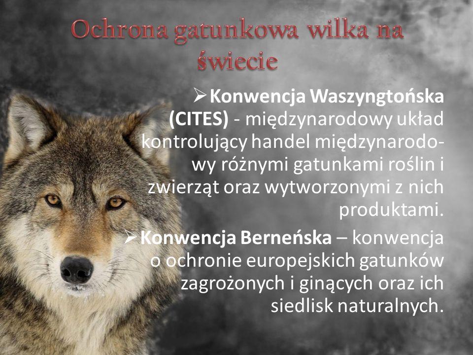  Konwencja Waszyngtońska (CITES) - międzynarodowy układ kontrolujący handel międzynarodo- wy różnymi gatunkami roślin i zwierząt oraz wytworzonymi z nich produktami.