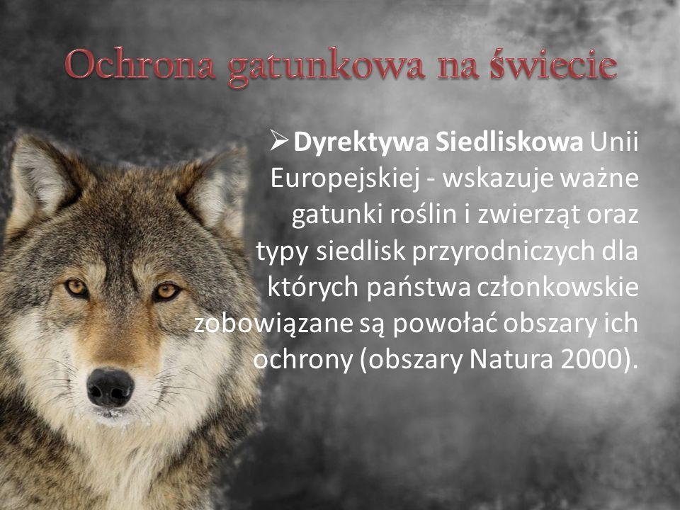  Dyrektywa Siedliskowa Unii Europejskiej - wskazuje ważne gatunki roślin i zwierząt oraz typy siedlisk przyrodniczych dla których państwa członkowskie zobowiązane są powołać obszary ich ochrony (obszary Natura 2000).
