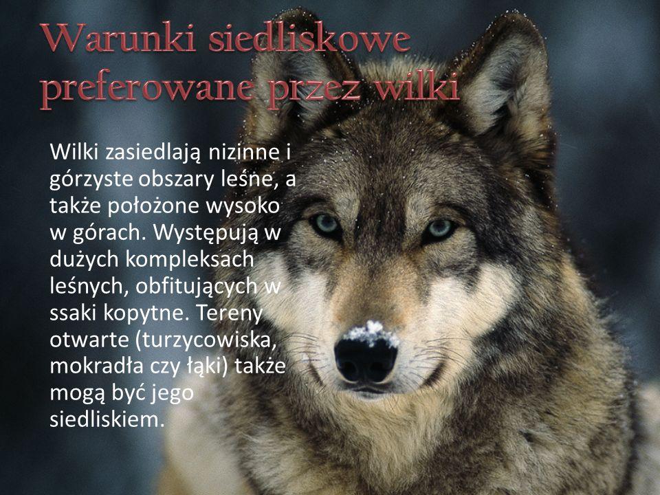 Wilki zasiedlają nizinne i górzyste obszary leśne, a także położone wysoko w górach.