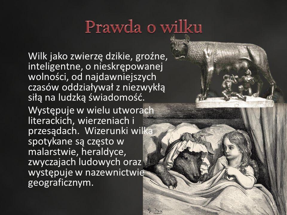 Wilk jako zwierzę dzikie, groźne, inteligentne, o nieskrępowanej wolności, od najdawniejszych czasów oddziaływał z niezwykłą siłą na ludzką świadomość.