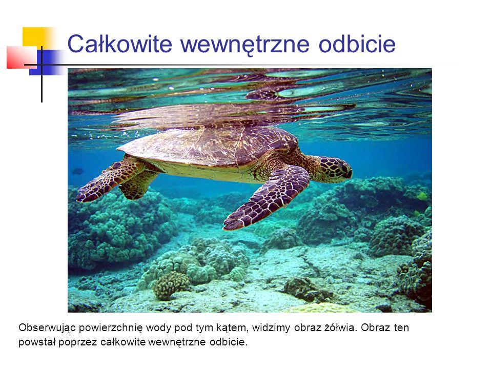 Obserwując powierzchnię wody pod tym kątem, widzimy obraz żółwia.