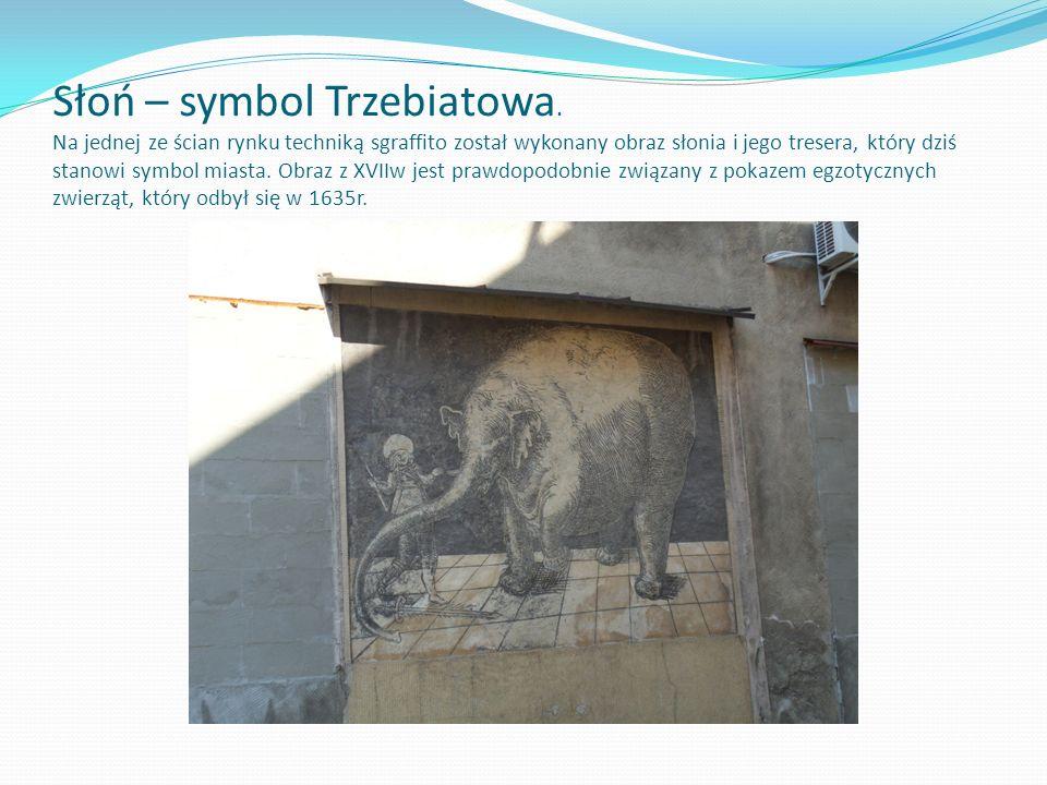 Słoń – symbol Trzebiatowa. Na jednej ze ścian rynku techniką sgraffito został wykonany obraz słonia i jego tresera, który dziś stanowi symbol miasta.