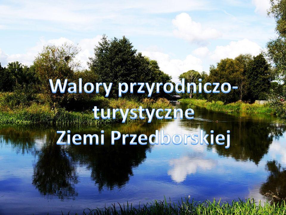Zajęcia terenowe Przedbórz i okolice