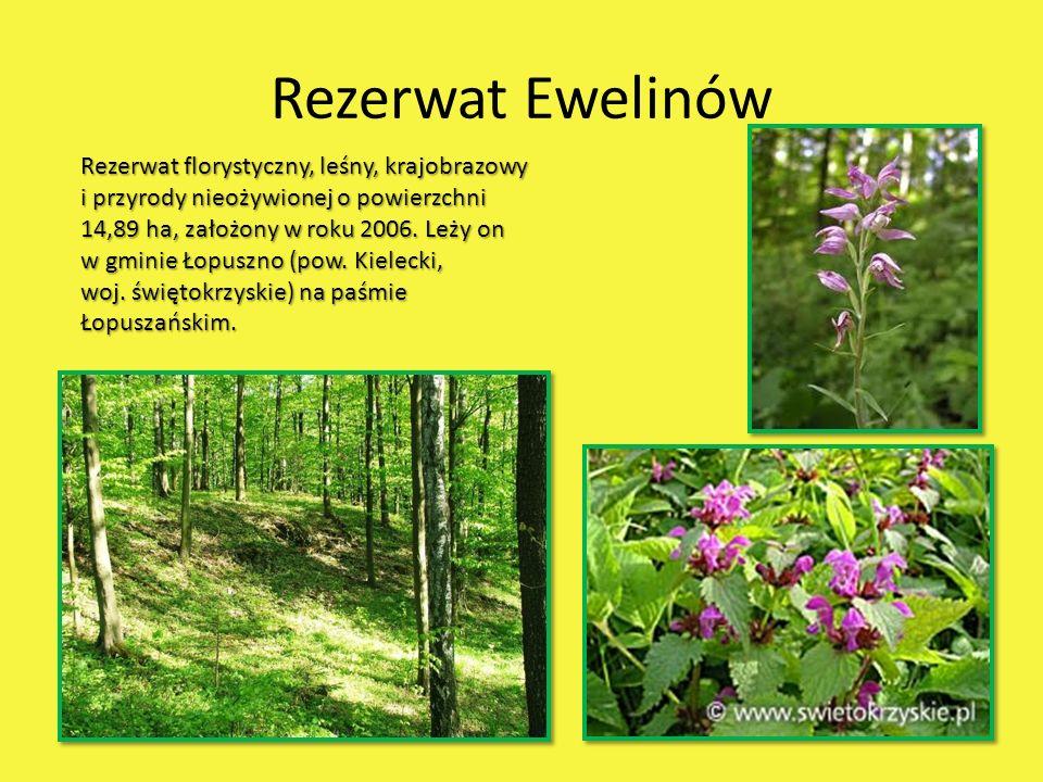 Rezerwat Ewelinów Rezerwat florystyczny, leśny, krajobrazowy i przyrody nieożywionej o powierzchni 14,89 ha, założony w roku 2006. Leży on w gminie Ło