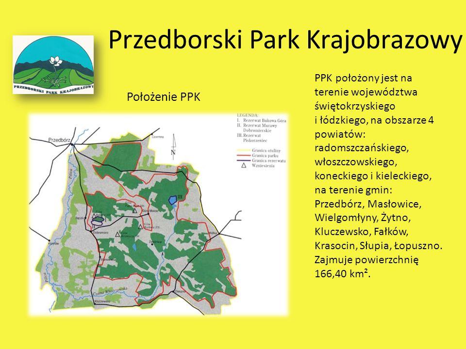 Przedborski Park Krajobrazowy Położenie PPK PPK położony jest na terenie województwa świętokrzyskiego i łódzkiego, na obszarze 4 powiatów: radomszczań