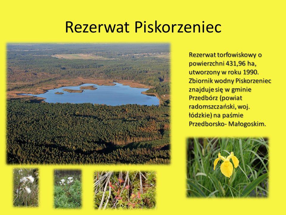 Rezerwat Bukowa Góra Rezerwat leśny o powierzchni 34,86 ha, utworzony w roku 1959.