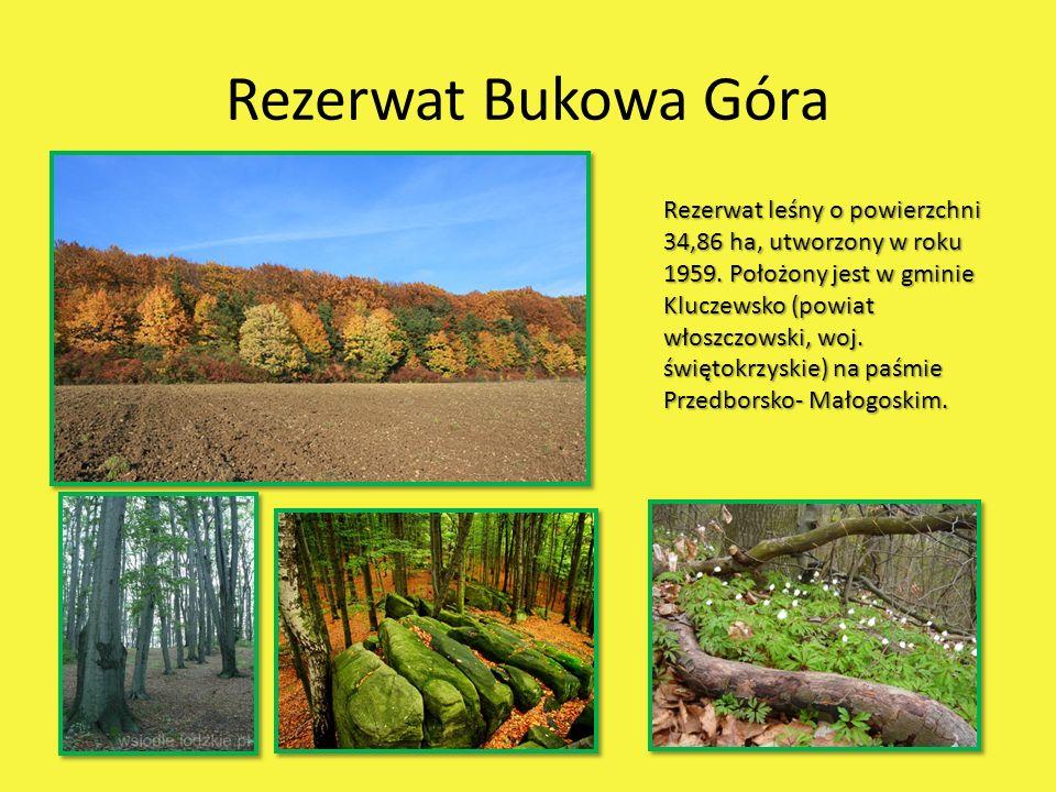 Rezerwat Bukowa Góra Rezerwat leśny o powierzchni 34,86 ha, utworzony w roku 1959. Położony jest w gminie Kluczewsko (powiat włoszczowski, woj. święto