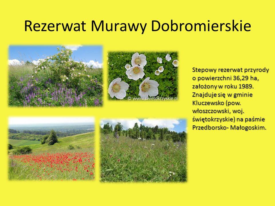 Rezerwat Murawy Dobromierskie Stepowy rezerwat przyrody o powierzchni 36,29 ha, założony w roku 1989. Znajduje się w gminie Kluczewsko (pow. włoszczow