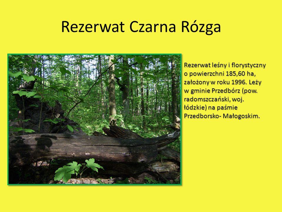 Rezerwat Czarna Rózga Rezerwat leśny i florystyczny o powierzchni 185,60 ha, założony w roku 1996. Leży w gminie Przedbórz (pow. radomszczański, woj.
