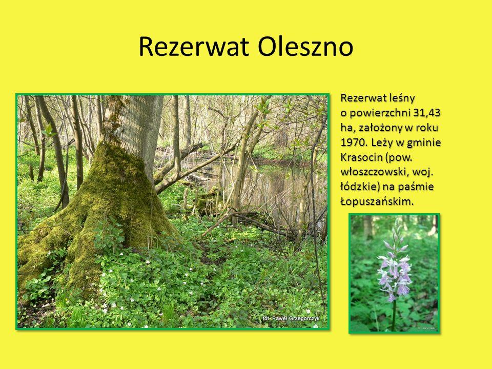 Rezerwat Oleszno Rezerwat leśny o powierzchni 31,43 ha, założony w roku 1970. Leży w gminie Krasocin (pow. włoszczowski, woj. łódzkie) na paśmie Łopus