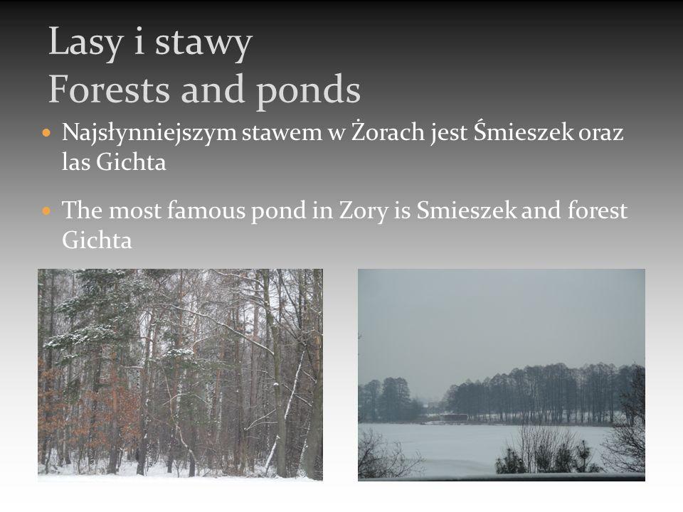 Najsłynniejszym stawem w Żorach jest Śmieszek oraz las Gichta The most famous pond in Zory is Smieszek and forest Gichta Lasy i stawy Forests and ponds