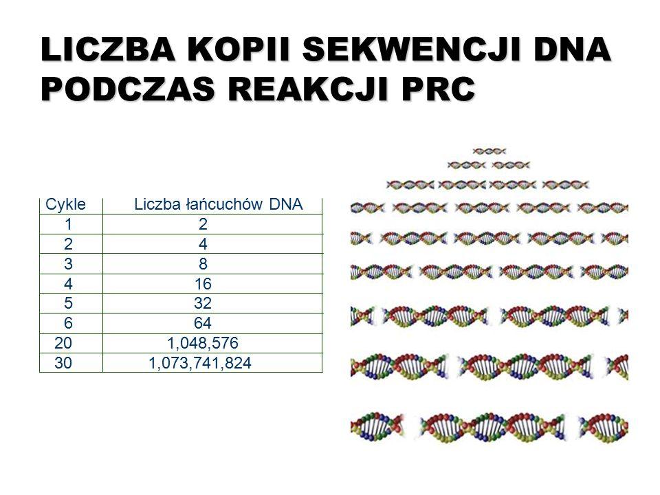 LICZBA KOPII SEKWENCJI DNA PODCZAS REAKCJI PRC Cykle Liczba łańcuchów DNA 1 2 2 4 3 8 4 16 5 32 6 64 20 1,048,576 30 1,073,741,824