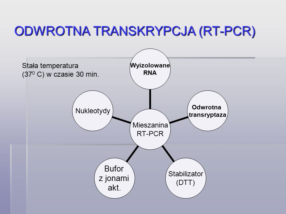 ODWROTNA TRANSKRYPCJA (RT-PCR) Mieszanina RT-PCR Wyizolowane RNA Odwrotna transryptaza Stabilizator (DTT) Bufor z jonami akt.