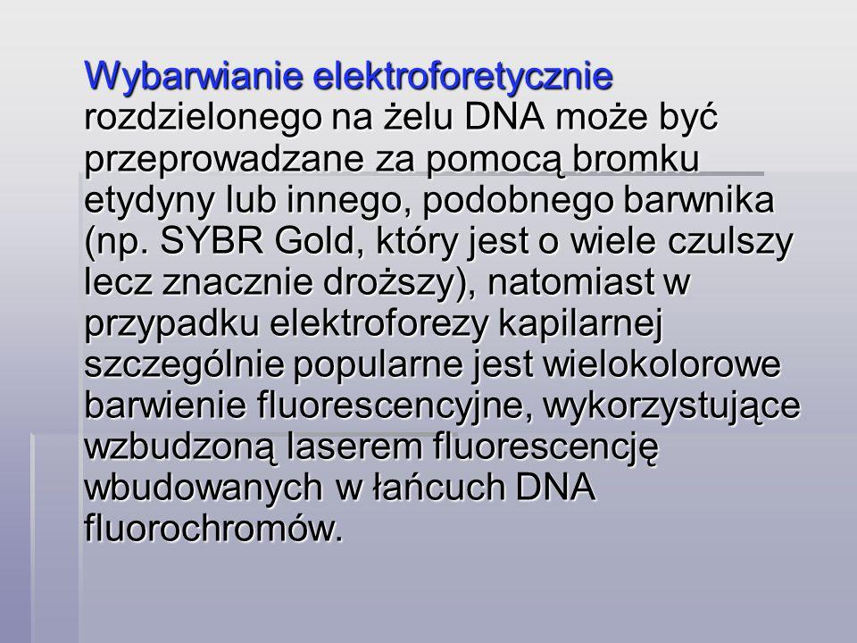 Wybarwianie elektroforetycznie rozdzielonego na żelu DNA może być przeprowadzane za pomocą bromku etydyny lub innego, podobnego barwnika (np.