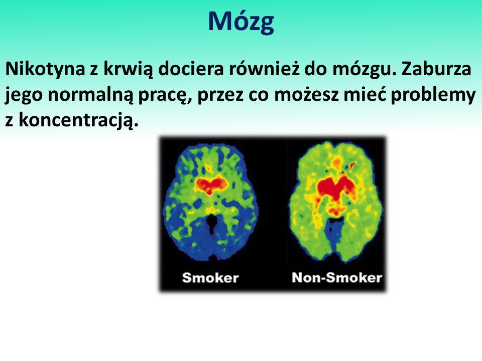 Mózg Nikotyna z krwią dociera również do mózgu. Zaburza jego normalną pracę, przez co możesz mieć problemy z koncentracją.