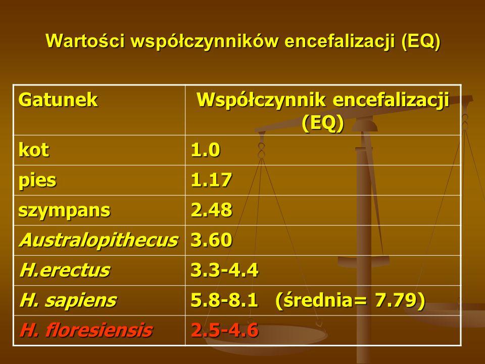 Wartości współczynników encefalizacji (EQ) Gatunek Współczynnik encefalizacji (EQ) kot1.0 pies1.17 szympans2.48 Australopithecus3.60 H.erectus3.3-4.4