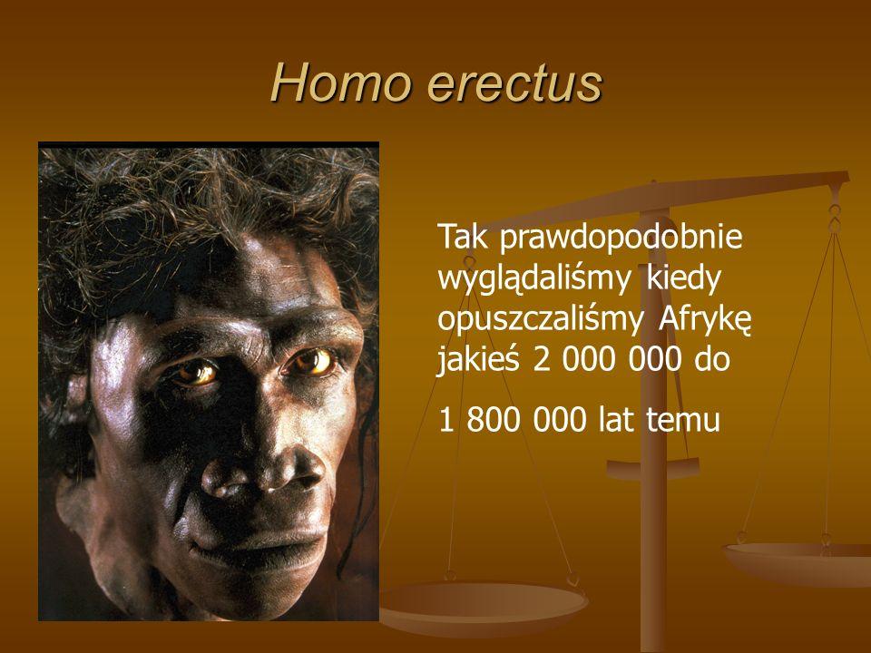 Homo erectus Tak prawdopodobnie wyglądaliśmy kiedy opuszczaliśmy Afrykę jakieś 2 000 000 do 1 800 000 lat temu