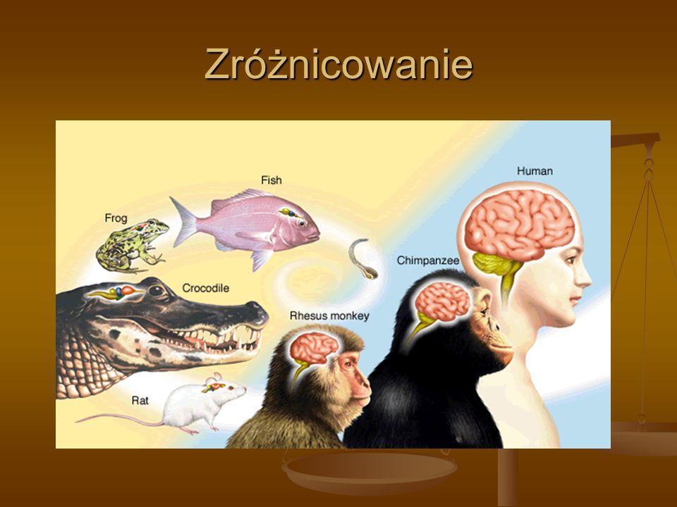 Umysł i jego przejawy Obiekty nieożywione nie mają umysłu Obiekty nieożywione nie mają umysłu Istoty ludzkie mają umysł; niektóre zwierzęta zachowują się tak, jakby miały umysł.