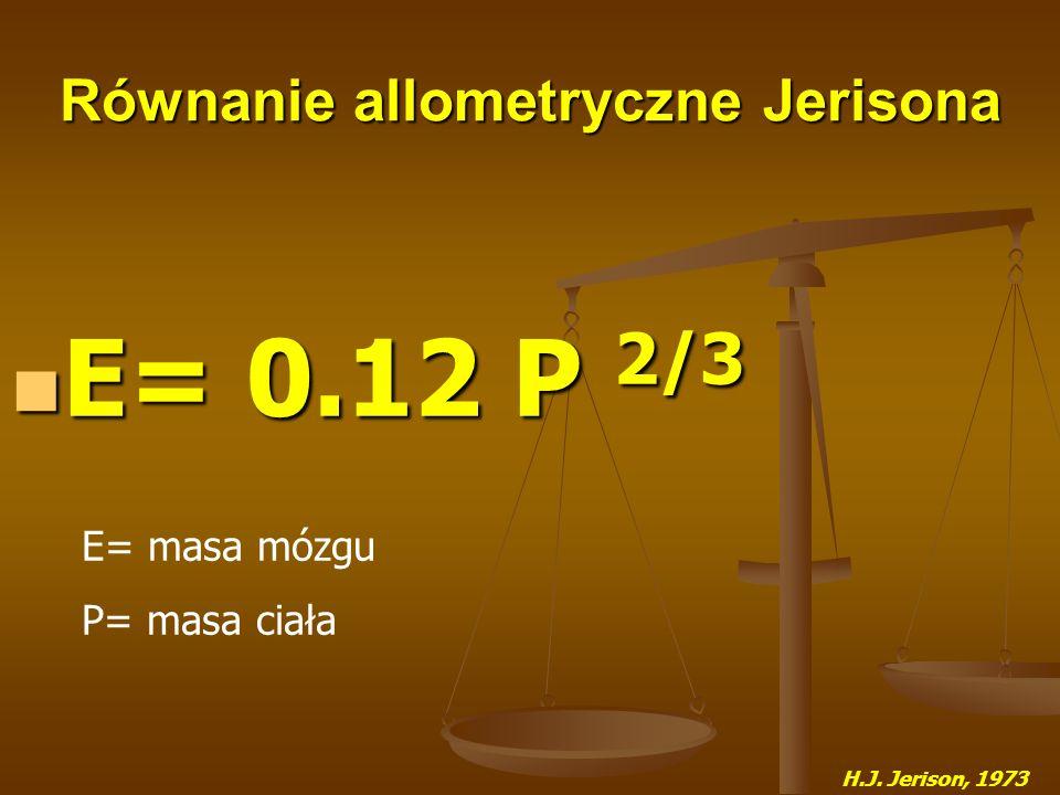 Równanie allometryczne Jerisona E= 0.12 P 2/3 E= 0.12 P 2/3 H.J. Jerison, 1973 E= masa mózgu P= masa ciała