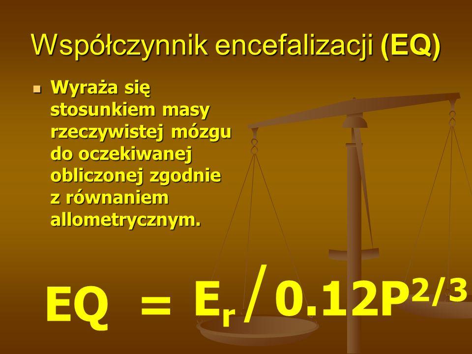 Zestawienie równań allometrycznych dla różnych grup systematycznych ssaków Równanie allometryczne Materiał Oczekiwana pojemności mózgu EQ E 1 =0.12P 0.67 198 gatunków ssaków 180.27.2 E 2 =0.0893P 0.78 89 gatunków naczelnych włącznie z człowiekiem 490.22.65 E 3 =0.5477P 0.58 36 gatunków małp wąskonosych 329.63.94 E 4 =0.6216P 0.58 7 gatunków małp człekokształtnych 391.13.32 E 5 =0.099P 0.76 88 gatunków naczelnych 462.72.87 E 6 =1.0P 0.649 człowiek13301.00 E 1 - Jerison,1983., E 2, E 3,E 4 – Bauchot, Stephan, 1969, E 5, E 6 - Holloway 1980,1988