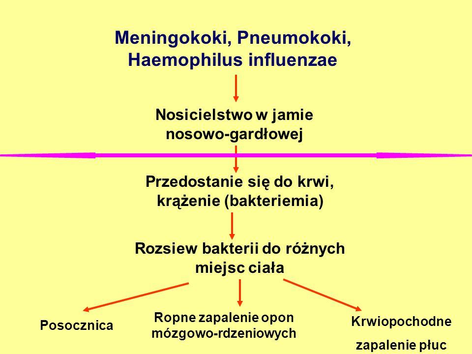 Meningokoki, Pneumokoki, Haemophilus influenzae Nosicielstwo w jamie nosowo-gardłowej Przedostanie się do krwi, krążenie (bakteriemia) Rozsiew bakteri