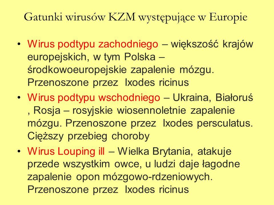 Gatunki wirusów KZM występujące w Europie Wirus podtypu zachodniego – większość krajów europejskich, w tym Polska – środkowoeuropejskie zapalenie mózg
