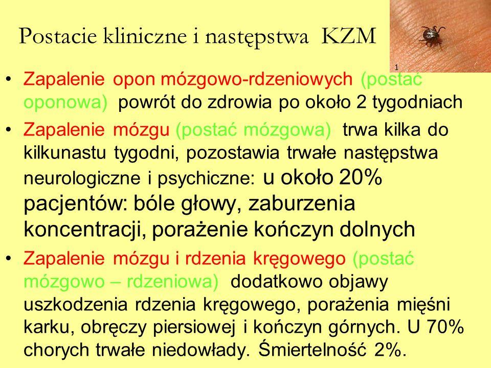 Postacie kliniczne i następstwa KZM Zapalenie opon mózgowo-rdzeniowych (postać oponowa) powrót do zdrowia po około 2 tygodniach Zapalenie mózgu (posta