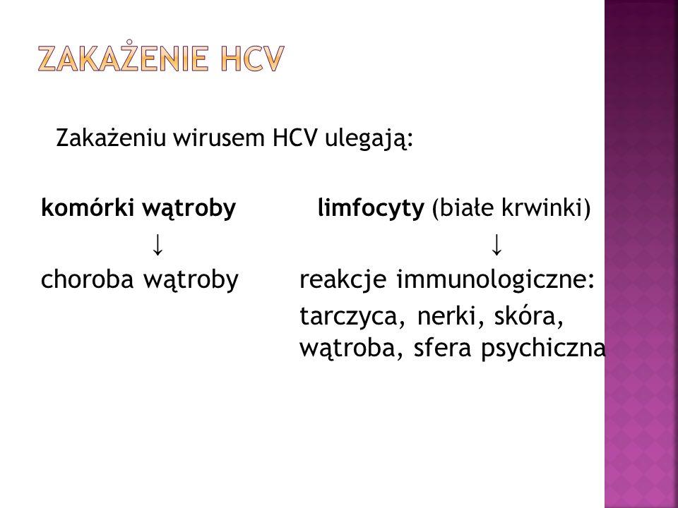 Zakażeniu wirusem HCV ulegają: komórki wątroby limfocyty (białe krwinki) ↓ choroba wątroby reakcje immunologiczne: tarczyca, nerki, skóra, wątroba, sf