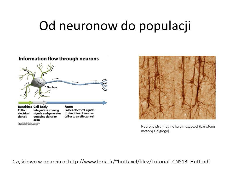 Od neuronow do populacji Neurony piramidalne kory mozgowej (barwione metodą Golgiego) Częściowo w oparciu o: http://www.loria.fr/~huttaxel/filez/Tutor