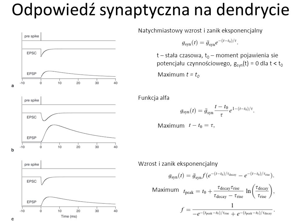 Odpowiedź synaptyczna na dendrycie Natychmiastowy wzrost i zanik eksponencjalny t – stała czasowa, t 0 – moment pojawienia sie potencjału czynnościowego, g syn (t) = 0 dla t < t 0 Maximum t = t 0 Funkcja alfa Maximum Wzrost i zanik eksponencjalny Maximum