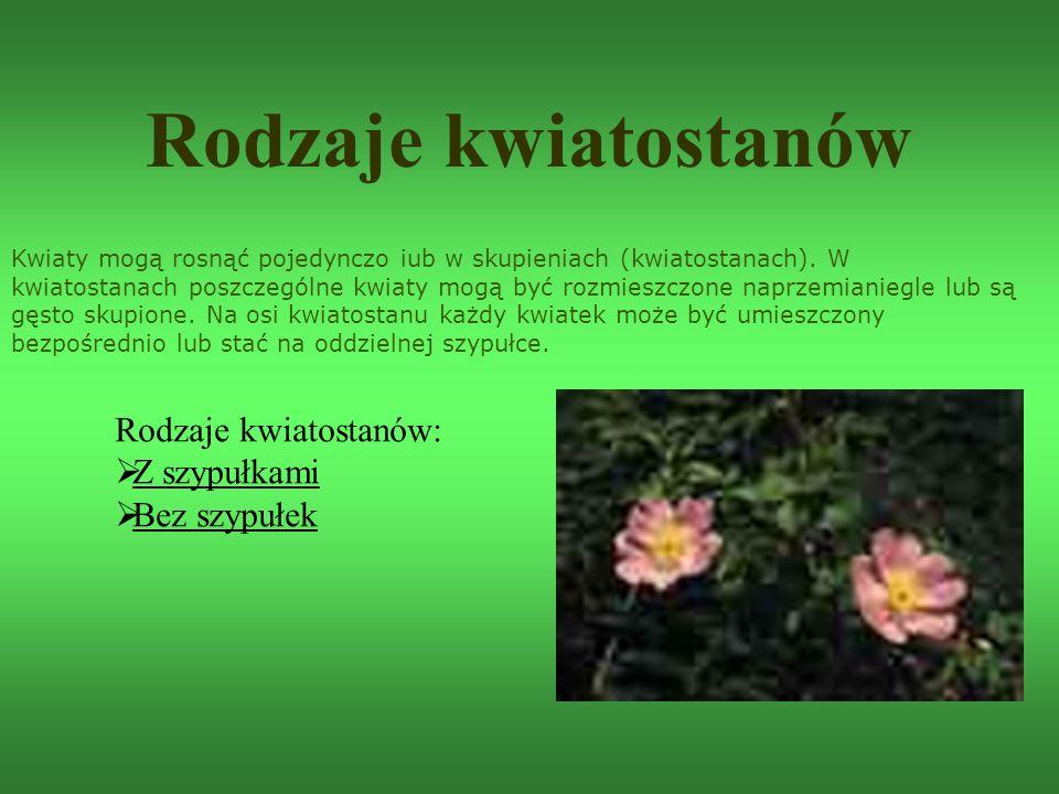 Rodzaje kwiatostanów Kwiaty mogą rosnąć pojedynczo iub w skupieniach (kwiatostanach). W kwiatostanach poszczególne kwiaty mogą być rozmieszczone naprz