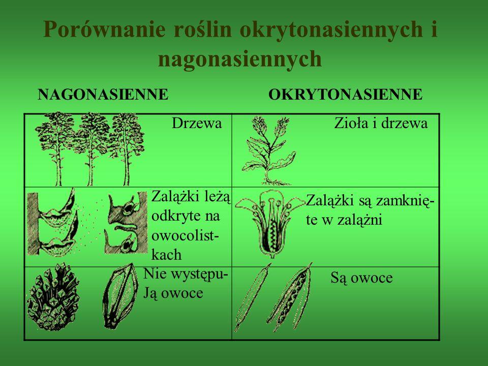 Porównanie roślin okrytonasiennych i nagonasiennych DrzewaZioła i drzewa Zalążki leżą odkryte na owocolist- kach NAGONASIENNE OKRYTONASIENNE Zalążki s