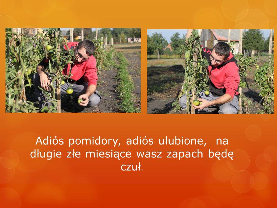 Ekipa ogrodnicza w akcji…
