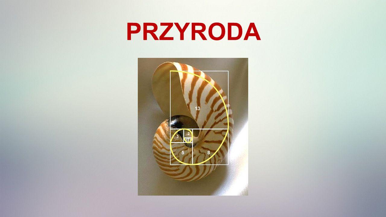 PRZYRODA