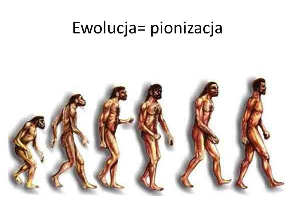 Ewolucja= pionizacja