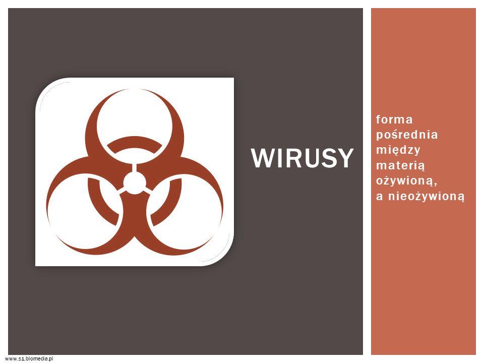 forma pośrednia między materią ożywioną, a nieożywioną WIRUSY www.s1.blomedia.pl