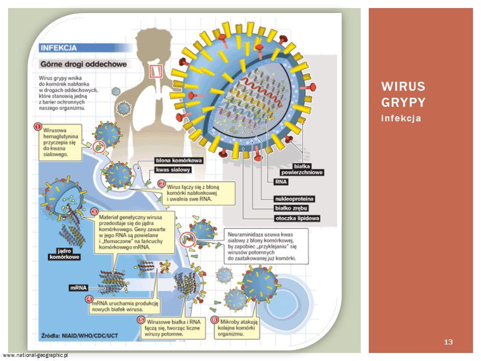 infekcja WIRUS GRYPY www.national-geographic.pl 13