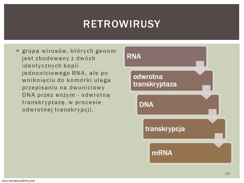  grupa wirusów, których genom jest zbudowany z dwóch identycznych kopii jednoniciowego RNA, ale po wniknięciu do komórki ulega przepisaniu na dwuniciowy DNA przez enzym - odwrotną transkryptazę, w procesie odwrotnej transkrypcji.