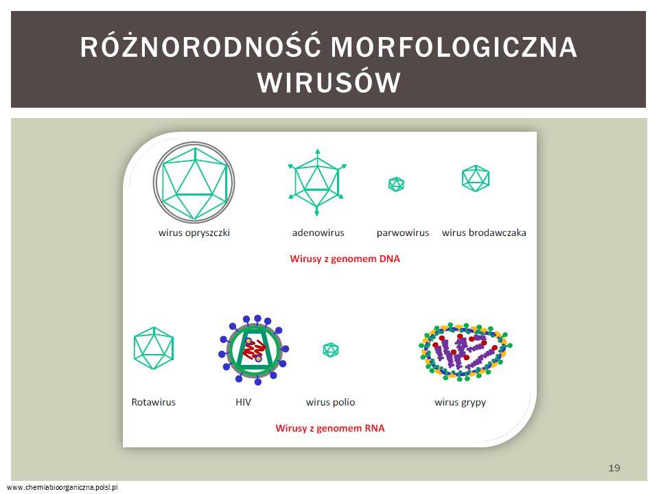 RÓŻNORODNOŚĆ MORFOLOGICZNA WIRUSÓW www.chemiabioorganiczna.polsl.pl 19