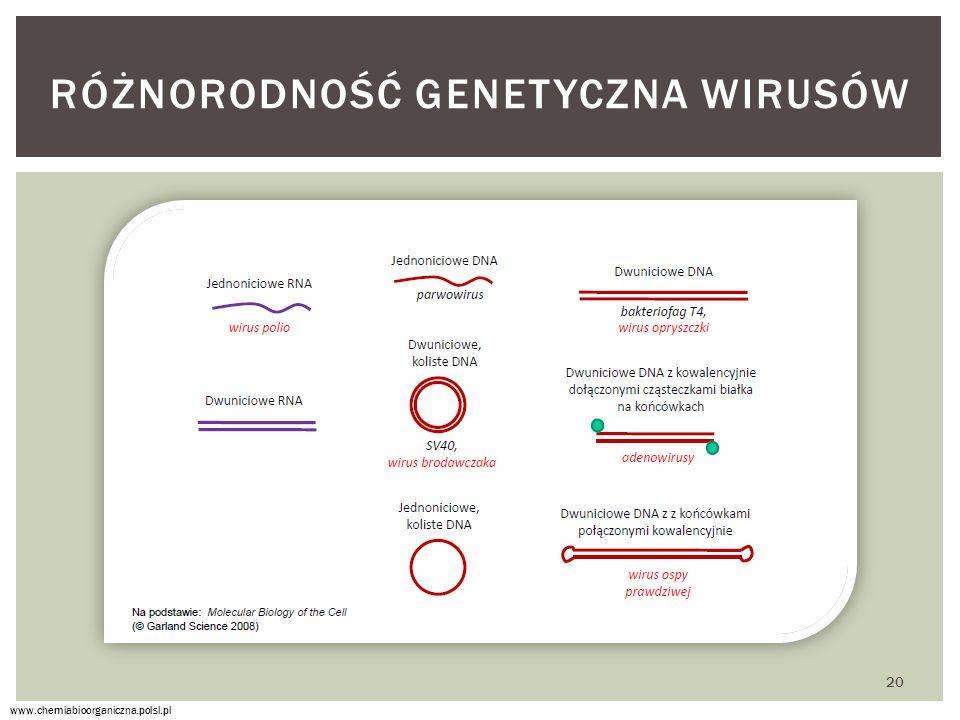 RÓŻNORODNOŚĆ GENETYCZNA WIRUSÓW www.chemiabioorganiczna.polsl.pl 20