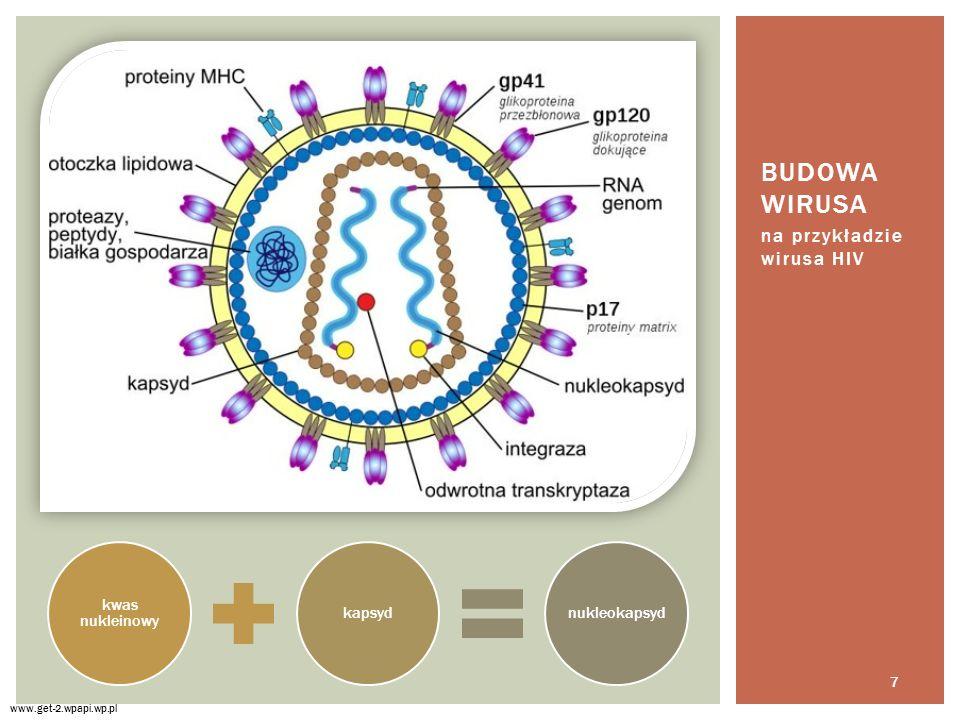 na przykładzie wirusa HIV BUDOWA WIRUSA www.get-2.wpapi.wp.pl kwas nukleinowy kapsydnukleokapsyd 7