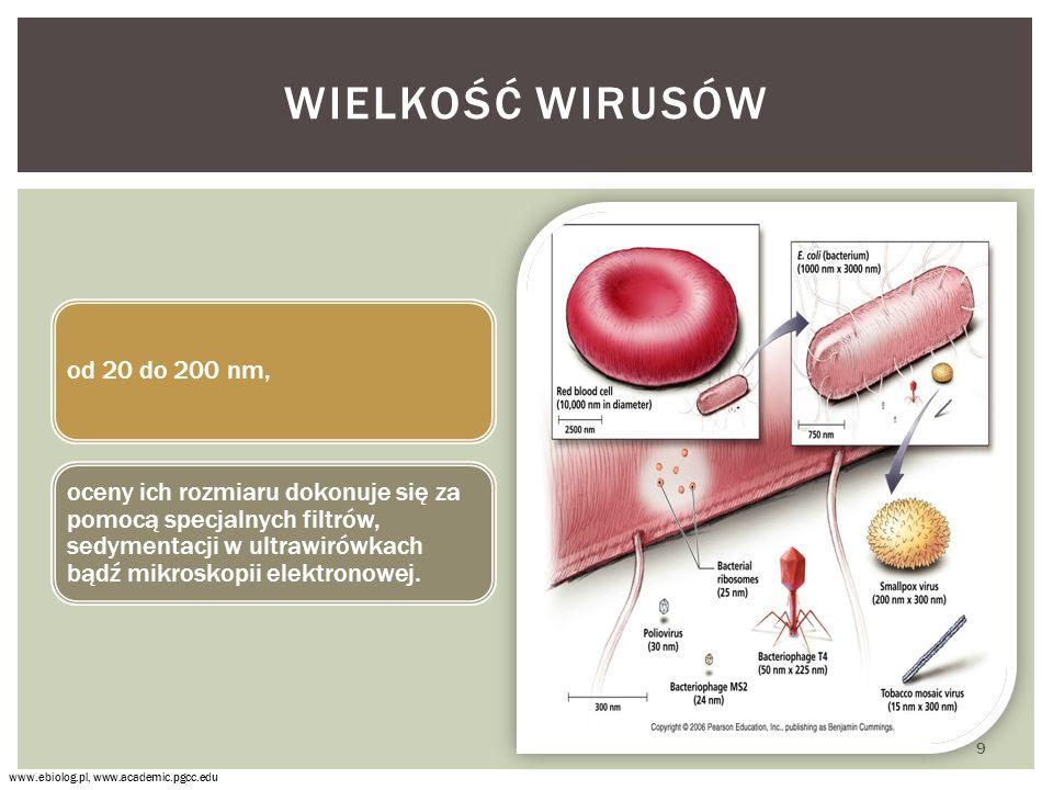 NAMNAŻANIE WIRUSÓW CYKL LITYCZNY Biologia 1,2.Zakres podstawowy.