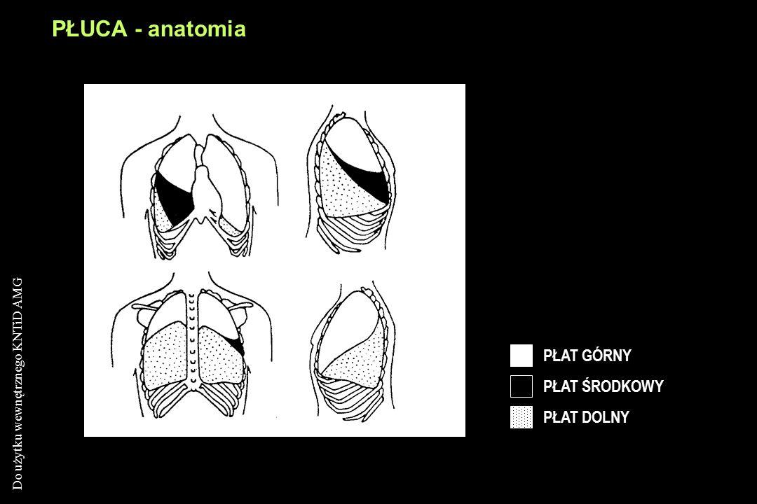 Do użytku wewnętrznego KNTiD AMG PŁUCA - anatomia