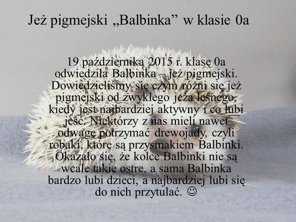 """Jeż pigmejski """"Balbinka w klasie 0a 19 października 2015 r."""