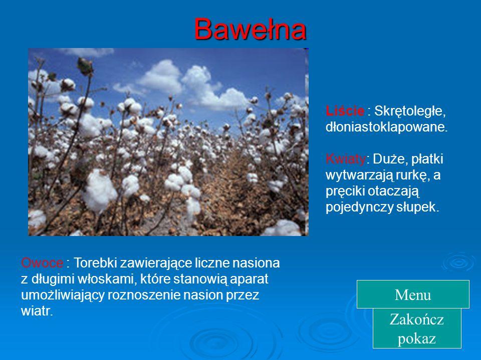Bawełna  Uprawiana w Indiach, Chinach, Egipcie, Persji i Arabii, Włoszech, USA, Grecji. Bawełna rośnie jak krzew, ziele lub drzewo, jest rośliną jedn