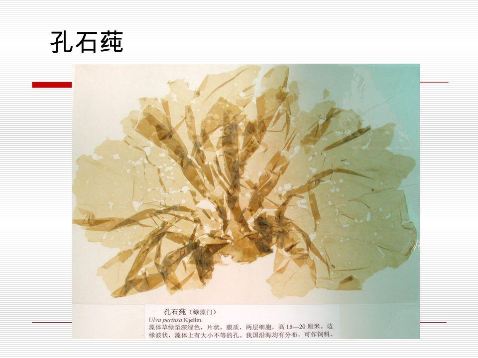 轮藻(装片)