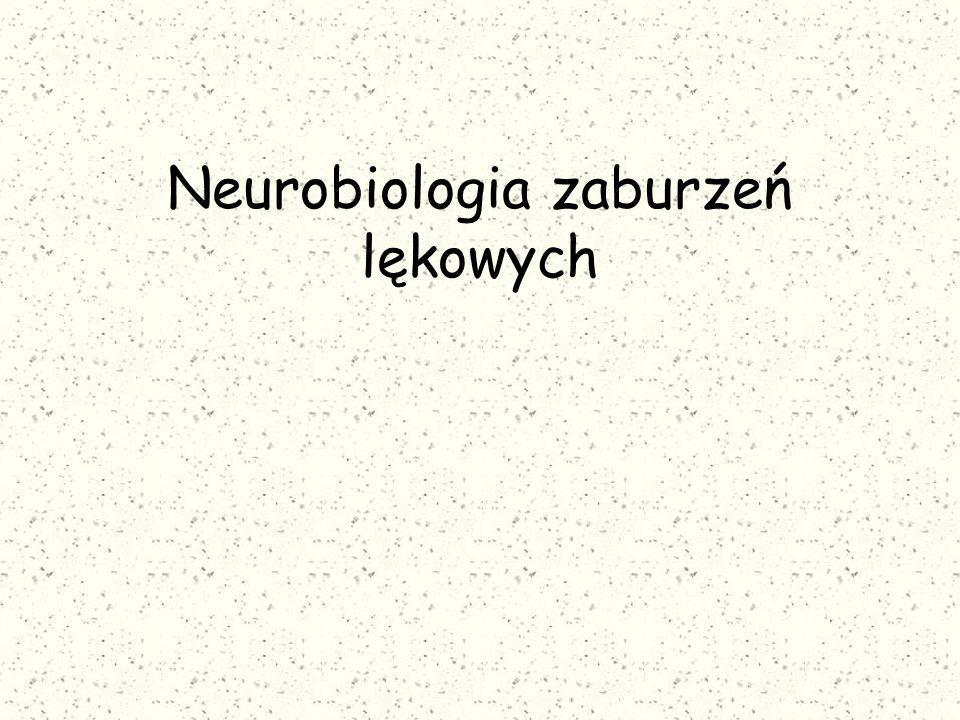 Koncepcja serotoninowa Wskazuje na związek dysfunkcji jąder grzbietowych szwu, ciała migdałowate oraz kory płatów czołowych z patogenezą zaburzeń lękowych.