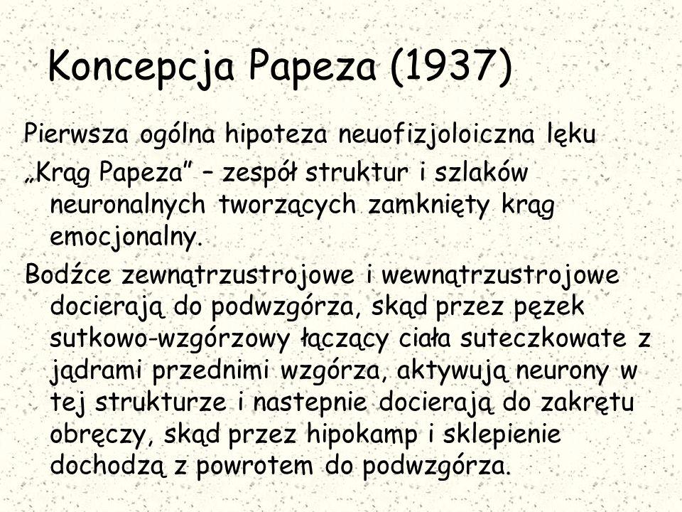"""Koncepcja Papeza (1937) Pierwsza ogólna hipoteza neuofizjoloiczna lęku """"Krąg Papeza – zespół struktur i szlaków neuronalnych tworzących zamknięty krąg emocjonalny."""
