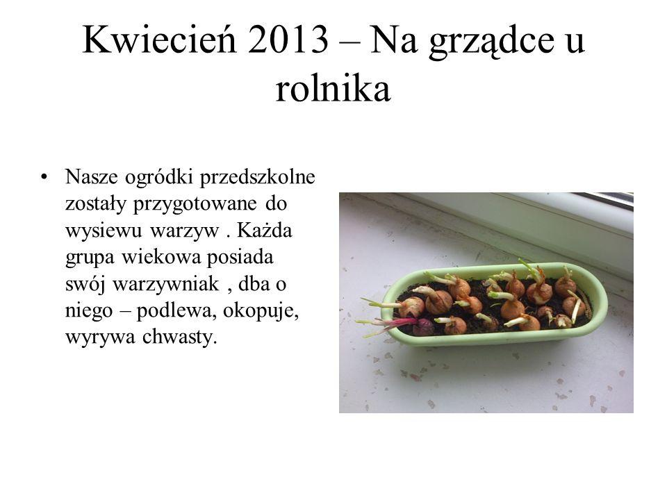 Maj 2013 - Zielnik – uprawa ziół Kącki przedszkolne zazieleniły się różnymi gatunkami ziół, między innymi; bazylią, szałwią, miętą, pietruszką, szczypiorkiem.